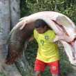 arapaima-florida-fish-invasive