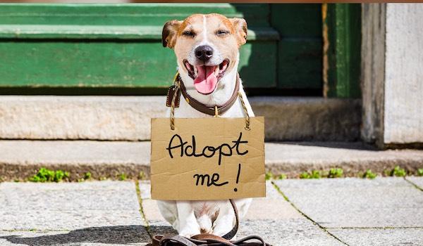 pet adoption scam