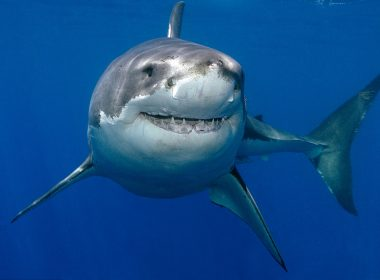 Great White Shark Breaks Into Cage With Diver, Blood Goes Everywhere